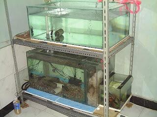 Akuarium Budidaya Ternak
