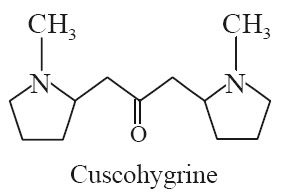 Cuscohygrine Synonyms Cuskhygrine; Bellaradine