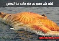 شاهد العثور على عروسه بحر ميته فى البحر الاحمر بمصر