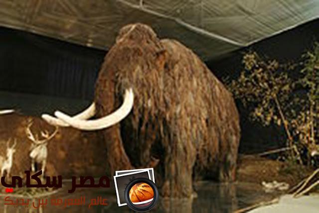 تعرف على حفرية الكائن الكامل Fossil of complete body