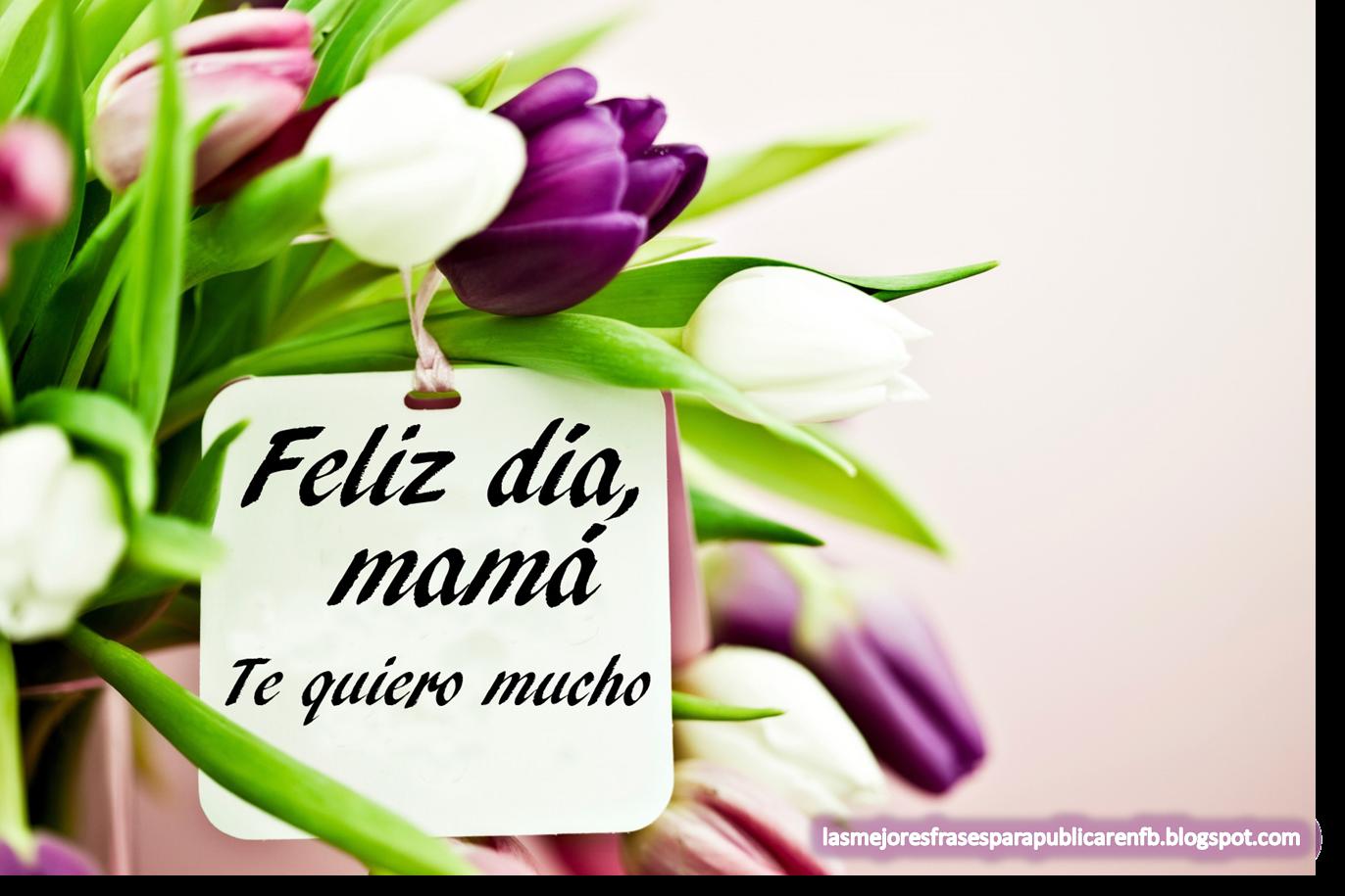 Frases Para El Día De La Madre: Feliz Día Mamá Te Quiero Mucho