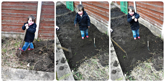 Small boy digging garden
