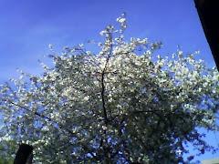 Explozie de flori, lumina si un cer senin... Pace, liniste si bucurie!