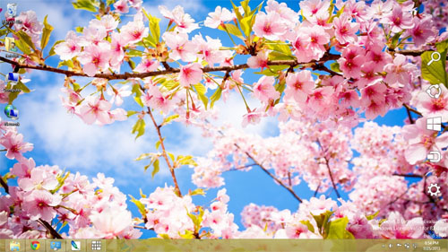 Sakura Flowers Theme For Windows 7 And 8
