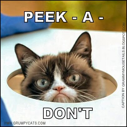 grumpy cat plays peek-a-DONT funny photo