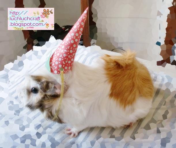 guinea pig cute hat