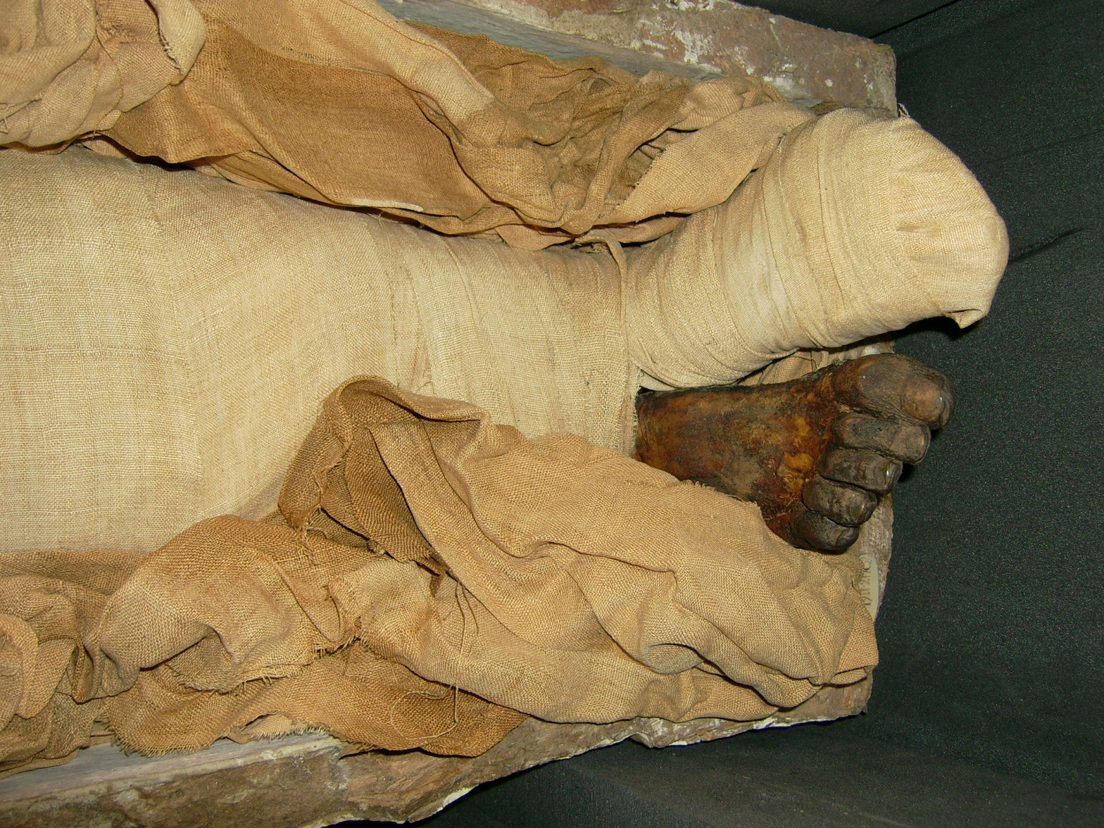 Seditiosus: Mummified demon