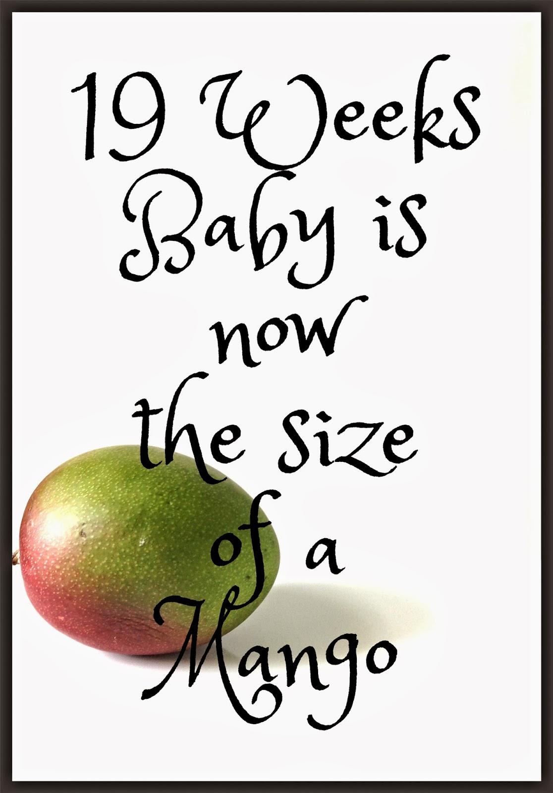 The Baby At 19 Weeks - Mango