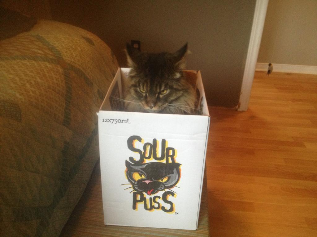 Серьезный кот в коробке