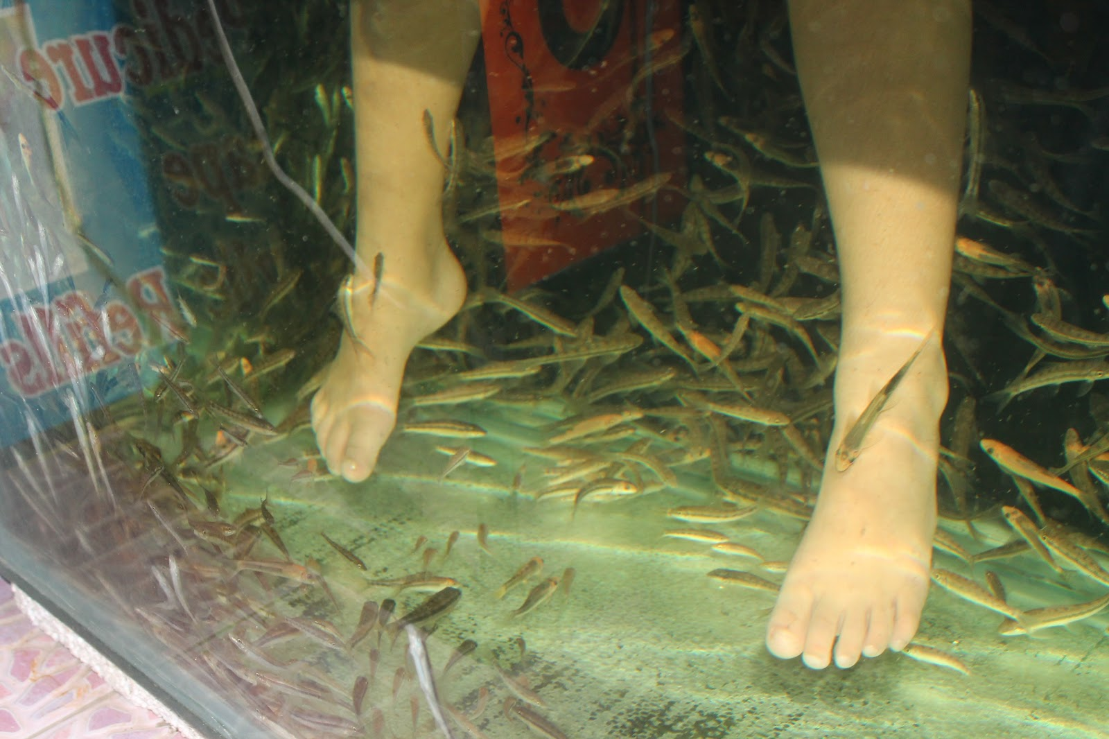 Things to do fish spa for Fish spa near me