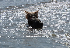 Lola prend son bain