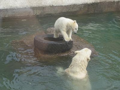 Мать играет со своим медвежонком