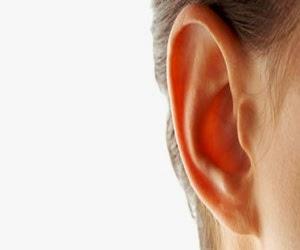 Belatung didalam telinga