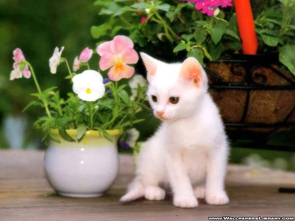 http://3.bp.blogspot.com/-EunAI6b9mls/ULTIow3Zf3I/AAAAAAAAICY/PoG8QsT-T7M/s1600/flower+pics+(16).jpg