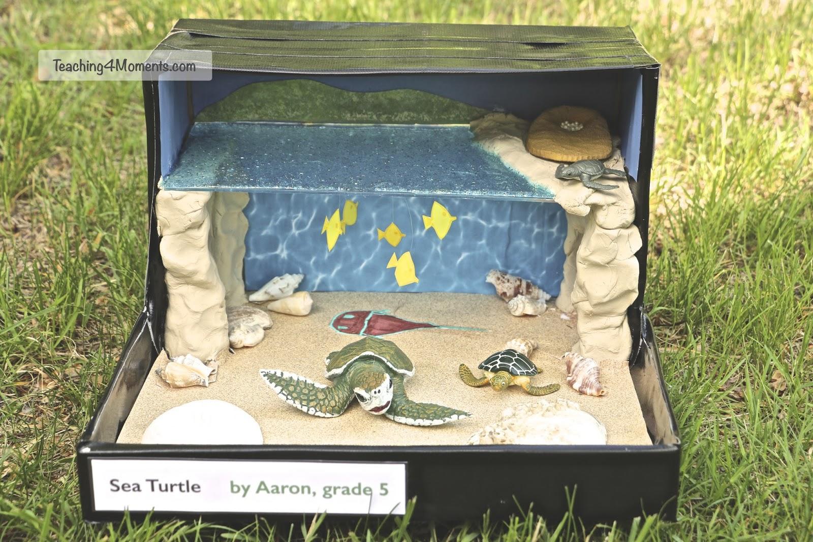 Teaching4moments making habitat dioramas for Habitat container