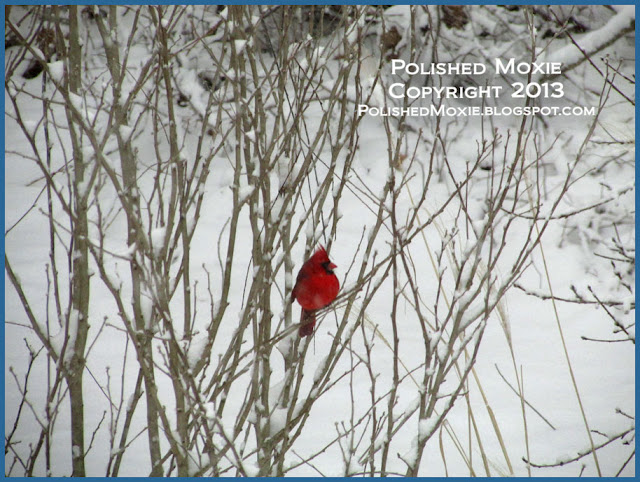 Picture of a male cardinal sitting in a snowy bush.