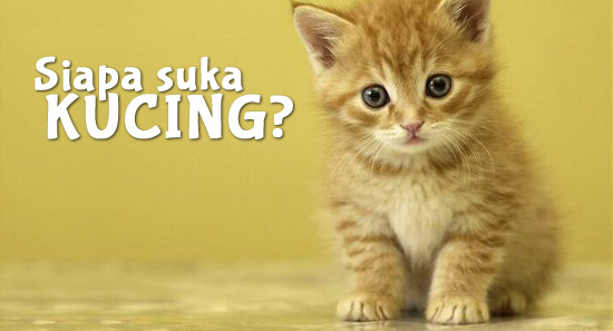 Kucing comel kiut