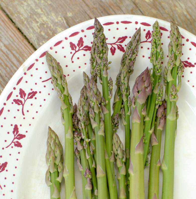 Wild Asparagus Plant Look For Wild Asparagus in