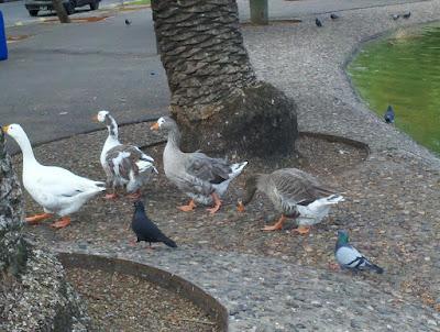 Argentina – Rosario – Parque Independencia – Animales.  http://www.dianateran01.blogspot.com.ar/