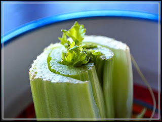 ating celery burns calories
