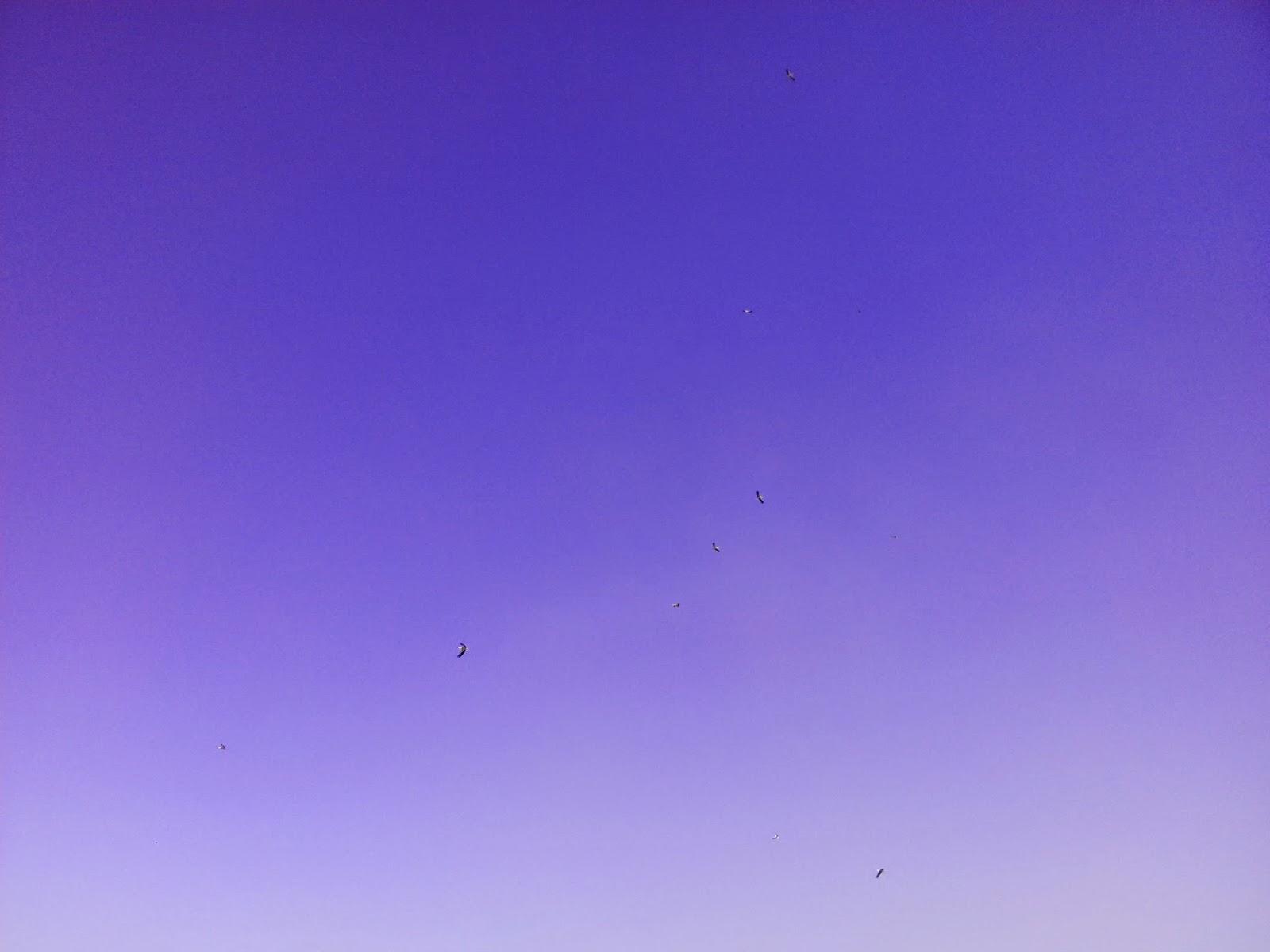 cigüeñas volando