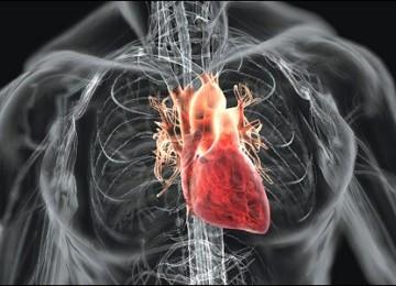 kesehatan jantung manusia