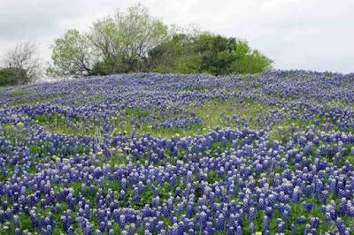 Những cánh Những cánh đồng hoa đẹp ngất ngây khắp thế giới