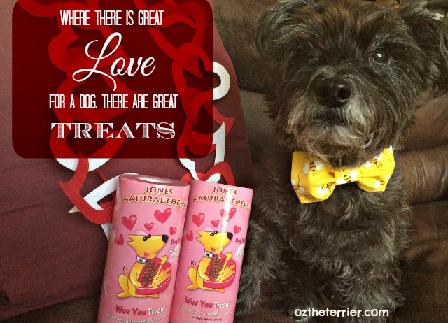 Oz the Terrier great love for dog means great treats Wuv You Treats by Jones Chews