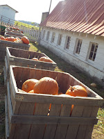 Bins of pumpkins