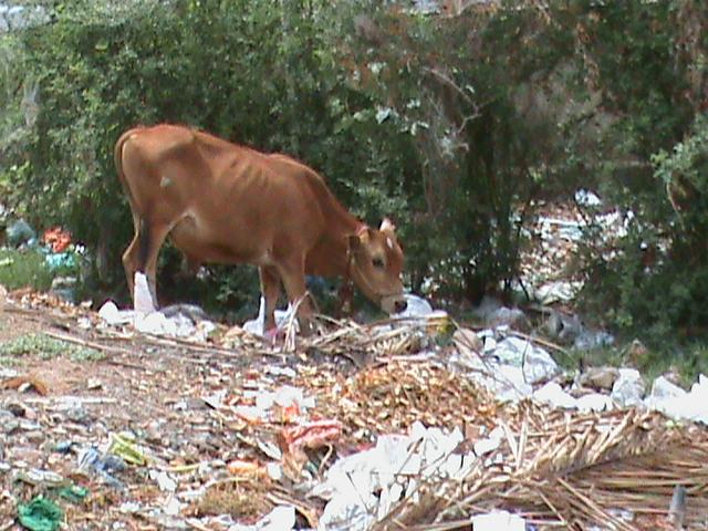 Animal Kingdom Food Chain
