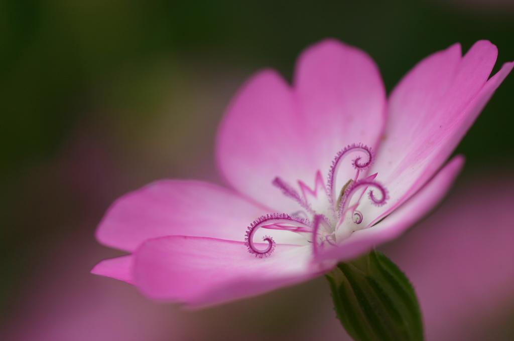 Tips of flower photography descargar