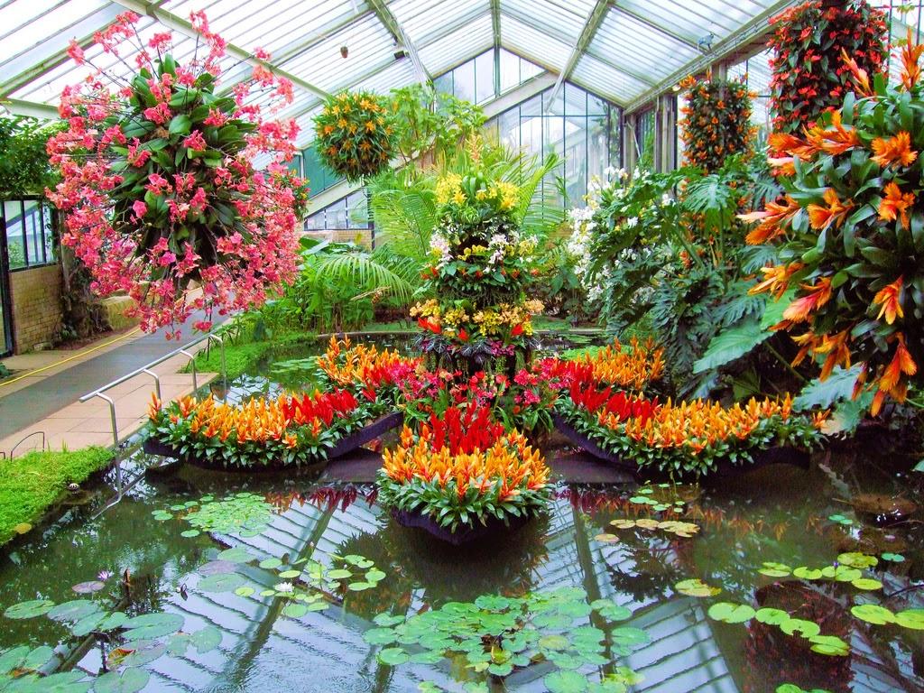 Orchids in the interior design. | Orchid Man in the United Kingdom on pretty wildlife, pretty barn, pretty water, pretty spring, pretty lawn, pretty green, pretty forest, pretty roses, pretty porch, pretty house, pretty church, pretty shed,
