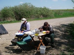 Bug Counts on Stauffer Creek