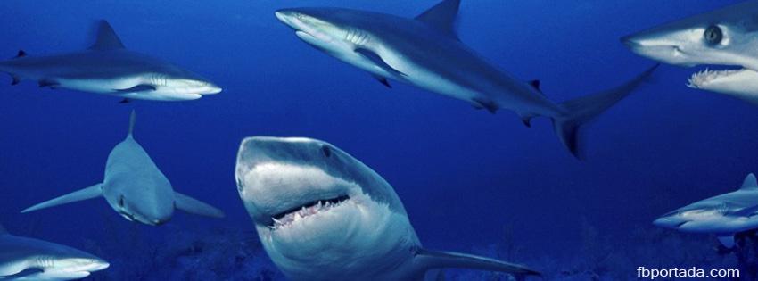 Tiburones En El Oceano