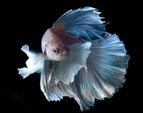 Picture And Funny The Most Beautiful Fish In The World
