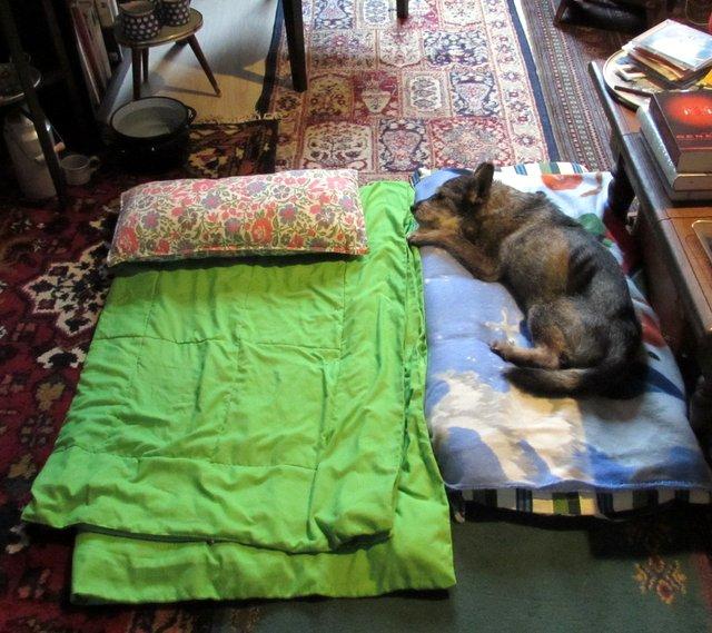 mein leben mit meinen tieren er kann nicht mehr. Black Bedroom Furniture Sets. Home Design Ideas