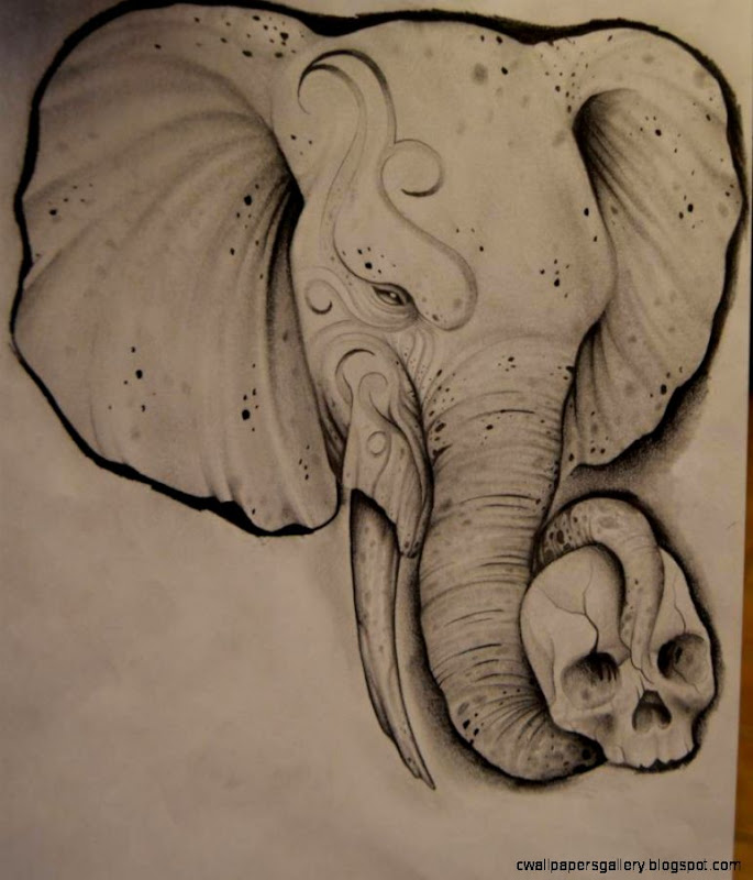 Butterfly Elephant Drawing Tumblr Www Picswe Com