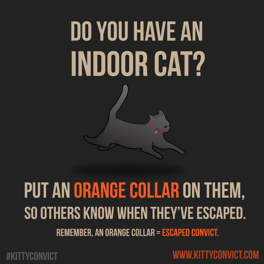 Orange is the new Cat!