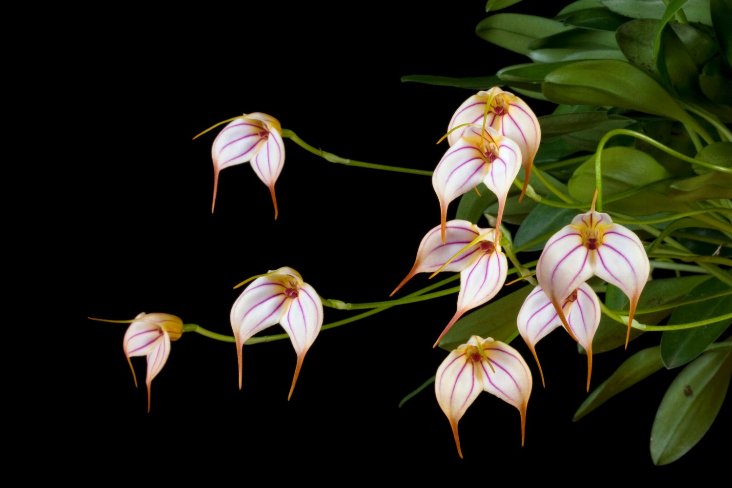 Amazing Flower Structure of Orchids ~ My GARDENING