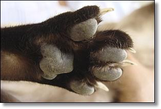 Oral Flea Control For Feral Cats