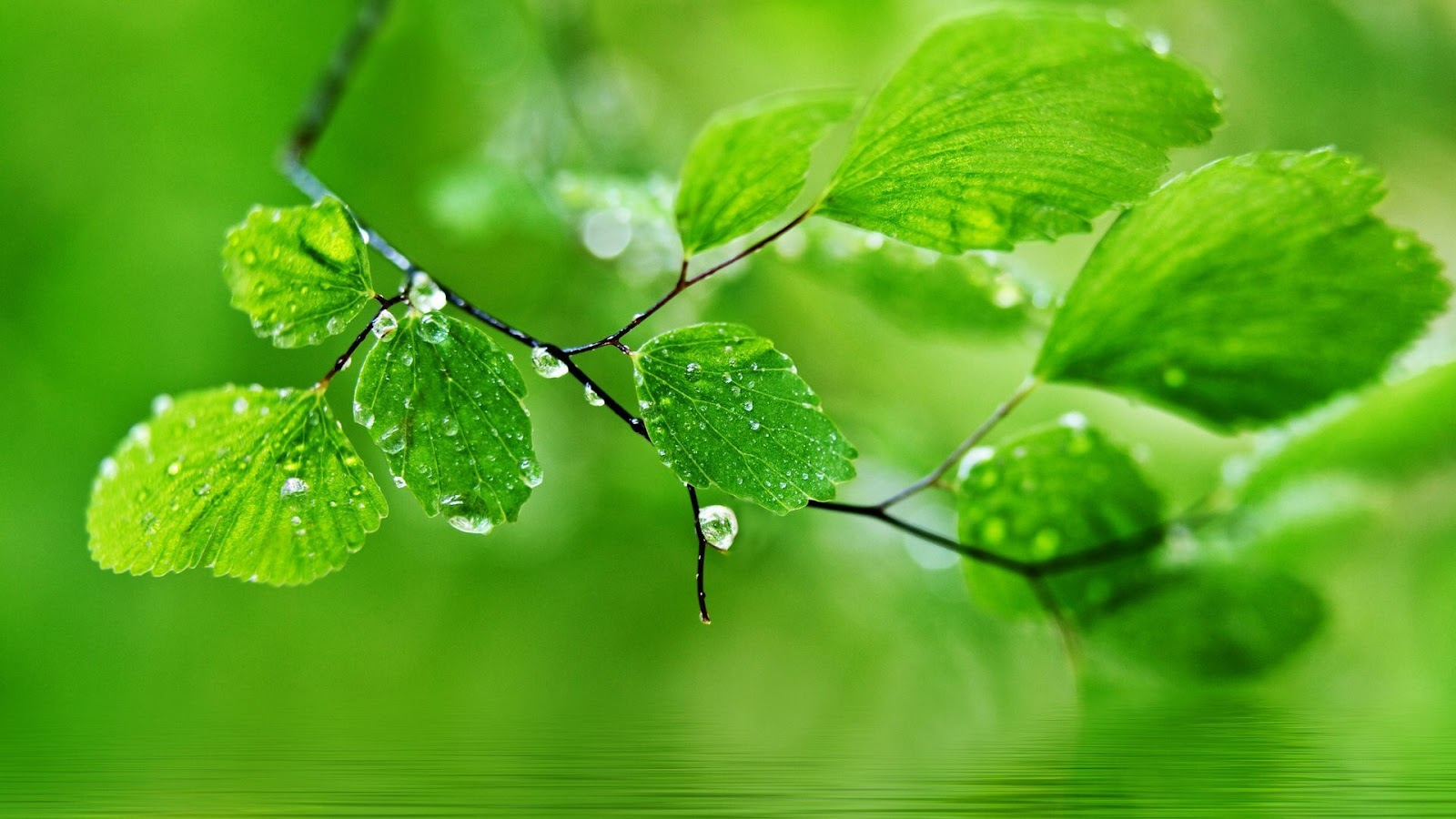 water drops on leaves hd desktop wallpapers for android