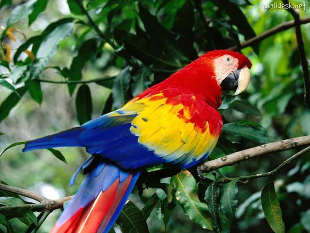 Imag Paisaje Animales Costa Rica_4