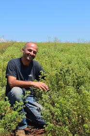 Δείτε τις ιστοσελίδες των βιοκαλλιεργητών Αρωματικών φυτών