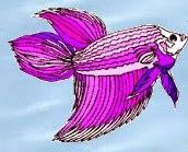 Betta Fish Care Siamese Fighting