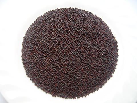 Mustard seeds mustard seeds are the small round seeds of