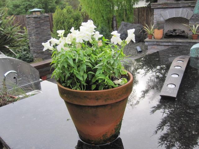 Landscapes gardens design planters Loll planters