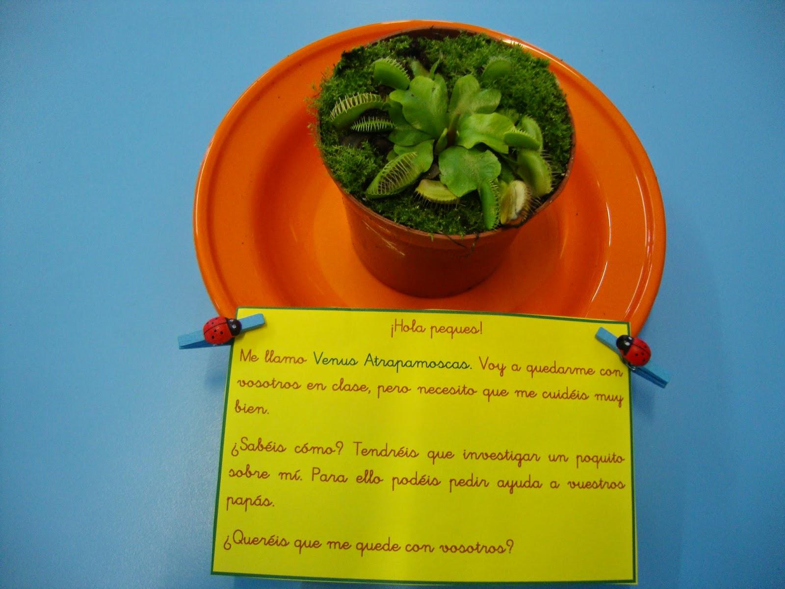 Educaci N Infantil Psj Proyecto Plantas Carn Voras