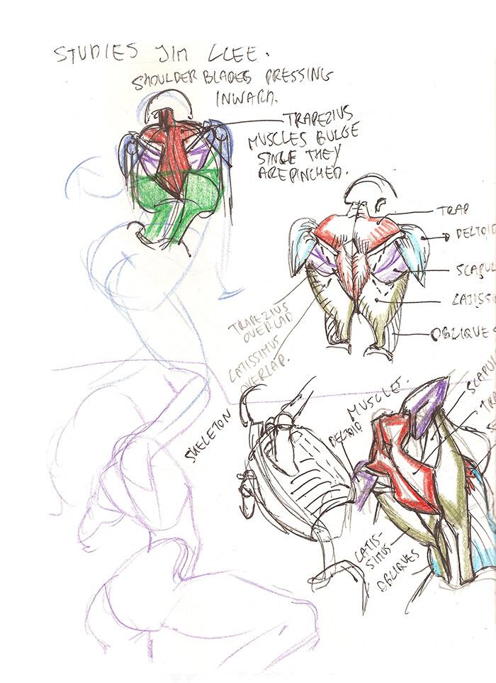 Lets Animate Study Jim Lee