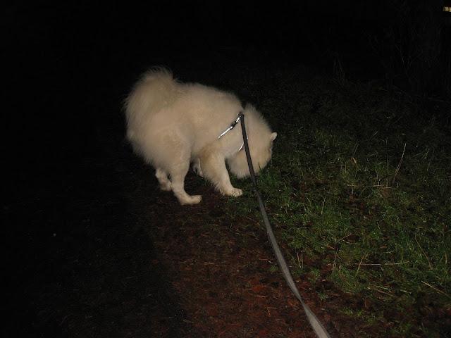 koiralle heijastimia