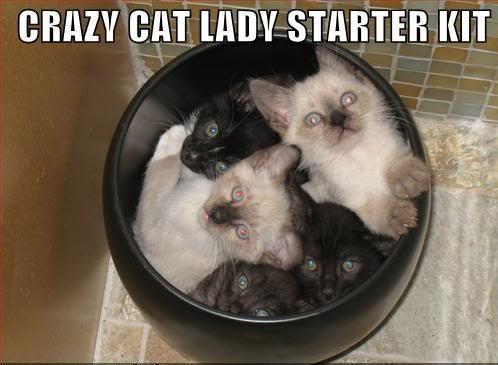 heated outdoor cat beds